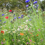 Wildflower meadow by Inspira (Get well soon)