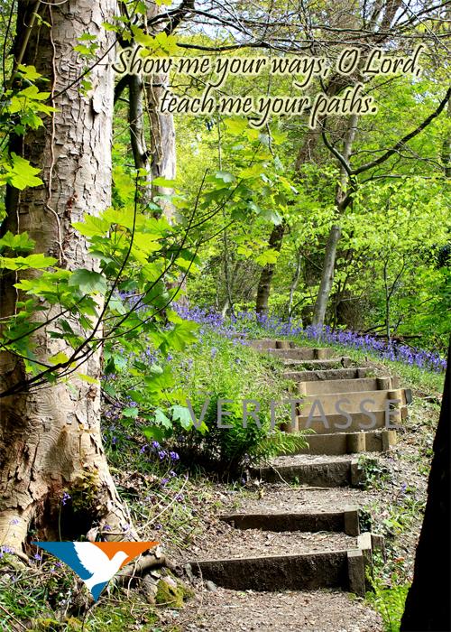 Woodland path by Inspira