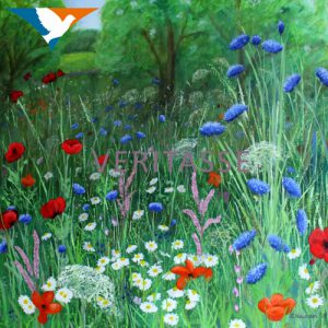 Wildflower meadow by Sue Newham