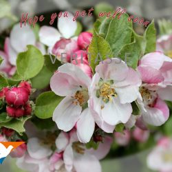 Apple blossom by Inspira