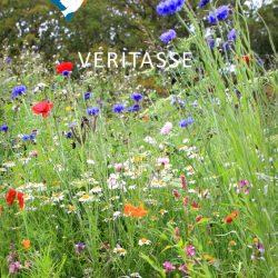 Wildflowers by Inspira