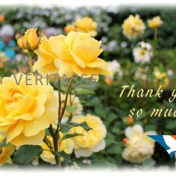 Rose garden by Inspira